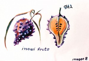 modif 4 Fruit